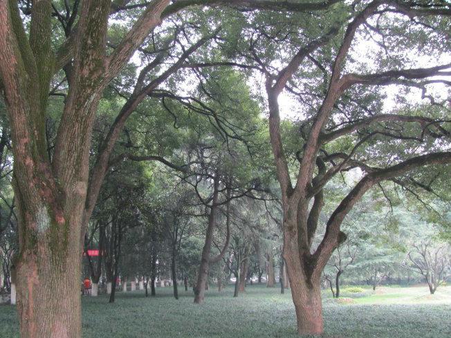 华中科技大学风景